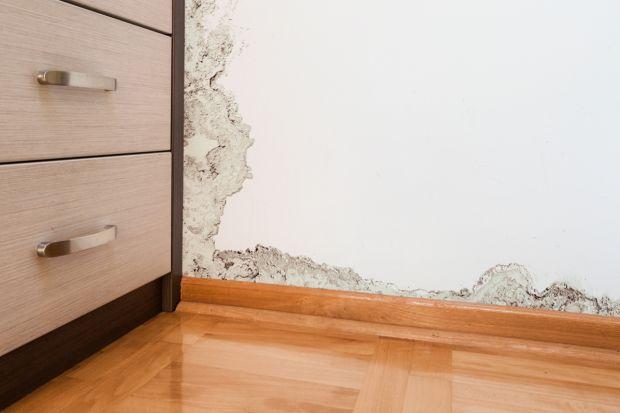 Jak skutecznie zwalczyć wilgoć i pleśń w mieszkaniu?