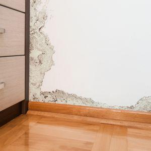 Wilgoć i pleśń w domu to częsty problem. Fot. depositphotos