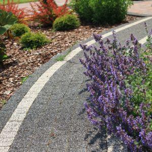 Wybierając rośliny pachnące, warto postawić na okazy sezonowe. Dzięki temu każdego lata będziemy mogli tworzyć inne kompozycje zapachowe. Wiosną pięknie pachną jabłonie, hiacynty, jaśminy (uwaga na bardzo charakterystyczny zapach!) i magnolie, natomiast w czerwcu i lipcu – lipy. Fot. Polbruk
