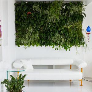 """Salon wyróżnia """"żywa""""  ściana, wprowadzając odrobinę soczystej zieleni i natury do """"sterylnie białych wnętrz. """"Zielona ściana"""" została wyposażona w automatyczny system nawadniania, który jest prosty w obsłudze. Dzięki temu właściciel mieszkania nie musi się martwić o podlewanie roślin tworzących """"ścienny żywopłot"""". Fot. Erdőháti Áron"""