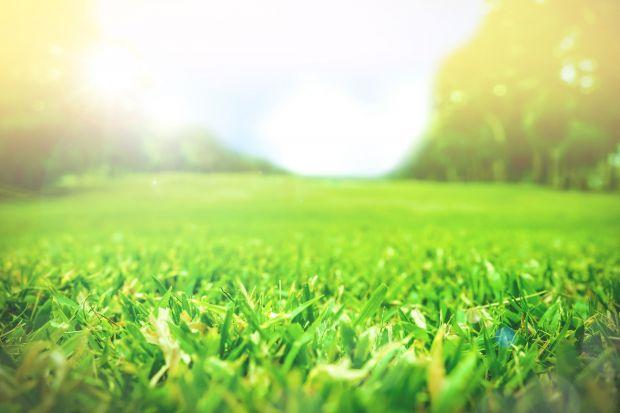 Mroźne temperatury oraz duże amplitudy powietrza wpływają negatywnie na kondycję gleby, dlatego w okresie wiosennym grunt potrzebuje szczególnej pielęgnacji i samo koszenie nie wystarczy. Krok po kroku radzimy jak odpowiednio zadbać o trawnik.