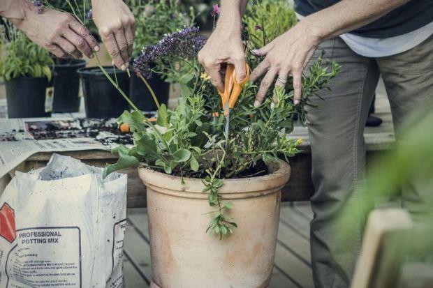 Najpopularniejszymi kwiatami na balkon są pelargonie – łatwe w uprawie, odporne na susze i podmuchy wiatru. Pięknie prezentują się również rośliny o zwisających pędach, jak surfinie, lobelie, petunie, czy fuksje. Wymagają one systematycznego