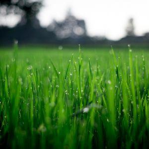 Zielony, puszysty i gęsty niczym dywan trawnik, jest celem każdego, kto posiada przydomowy ogródek. Fot. Pexels