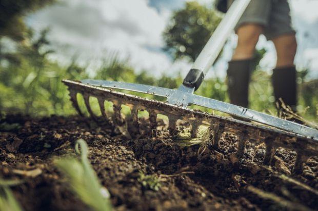 Do wiosennych prac w ogrodzie przystępujemy, gdy rozmarznie i obeschnie ziemia, czyli zwykle w drugiej połowie marca. Po zimie gleba na działce czy ogródku wymaga szeregu zabiegów, takich jak: spulchnianie, przekopywanie, odchwaszczanie, nawożenie,