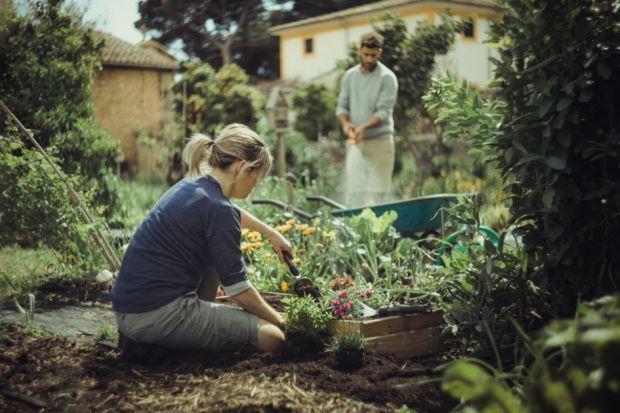 Ogród - zakładanie rabat kwiatowych