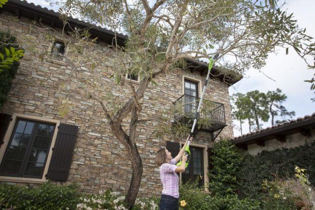Wiatr szalał w nocy – połamał kilka gałęzi wysoko nad ziemią. Trzeba je obciąć, ale jak się tam wdrapać, skoro to tak wysoko? A jak bezpiecznie ostrzyc wysoki żywopłot? Najlepszym rozwiązaniem (pod każdym względem) są nowoczesne, akumula