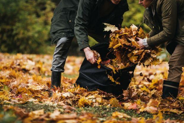 Trawnik jesienią kosi się zdecydowanie rzadziej niż podczas sezonu, a ostatnie koszenie warto zaplanować na drugą połowę października. Zachowajmy wysokość około 4 cm, czyli nie przycinajmy go za krótko, aby trawa zimą nie była narażona na p