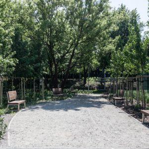 Co daje roślinność w miastach, może przekonać się każdy, szczególnie w upalny dzień. W przestrzeni, gdzie jest dużo drzew i innych roślin temperatura jest niższa. Fot. Hadart
