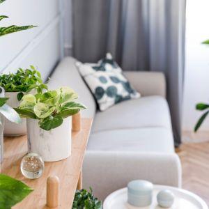 Odpowiednie gatunki roślin z powodzeniem poradzą sobie z uporczywymi zanieczyszczeniami powietrza, które przenikają do wnętrza przez nieszczelności czy uchylone okna. Fot. CentroClima