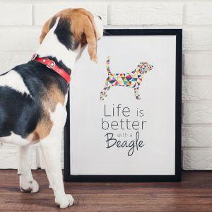 Obrazek marki PupiLu dla miłośników psów rasy Beagle. Fot Paulina Bochenek