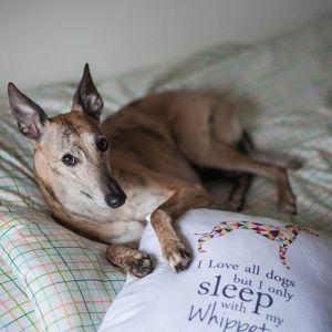 Poduszka marki PupiLu dla miłośników psów rasy Whippet. Fot. Julia Berbecka