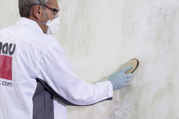 Ekspert radzi: grzyb na ścianie - jak z nim walczyć i zapobiegać?
