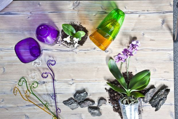 Storczyki - orchidee uprawiono już w czasach starożytnych. Fascynowały, inspirowały i zachwycały swoją barwą i kształtem. Były bohaterami legend i opowieści. Istnieje bardzo wiele gatunków tych ładnych kwiatów, a ich hodowla, wbrew niektórym