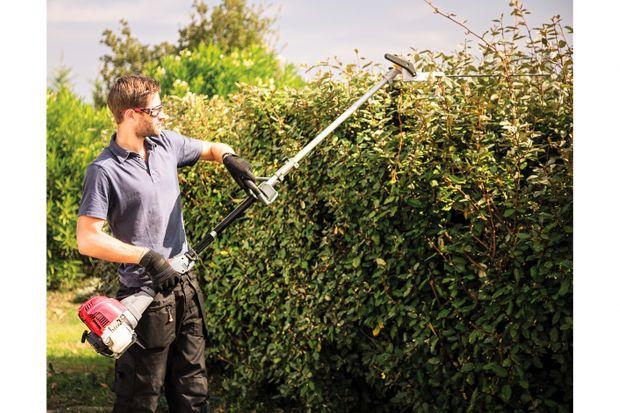 Przycinanie, wykonywane zgodnie ze sztuką, służy roślinie. Celem cięcia zimowego jest głównie usunięcie starych i chorych pędów, usunięcie gałązek krzyżujących się w taki sposób, że ich wzajemne ocieranie się podczas wiatru uszkadza kor
