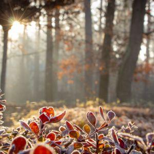 Zabezpieczenie roślin na zimę. Fot. Greenworks/Lange Łukaszuk
