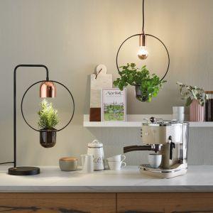 Lampa wisząca Fanja to połączenie lampy z rośliną doniczkową. Fot. Paulmann /Lange Lukaszuk