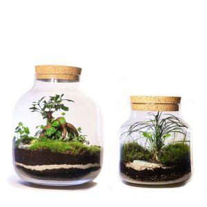Nawet mały element żywej zieleni we wnętrzu jest nie tylko uniwersalną ozdobą, ale również pozytywnie wpływa na samopoczucie człowieka. Fot. Małgorzata Opęchowska
