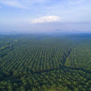 Olej palmowy. O co ten raban. Fot. Instytut Ochrony Środowiska - Państwowy Instytut Badawczy