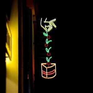 projekt neonu dla kultowej już cukierni LUKULLUS w Warszawie przy ul. Mokotowskiej. Fot. materiały Magdaleny Łapińskiej-Rozenbaum