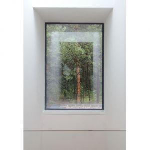 Niezwykły efekt tworzą od wewnątrz okna: są ramami dla leśnych obrazów wokół domu. Fot. zw A