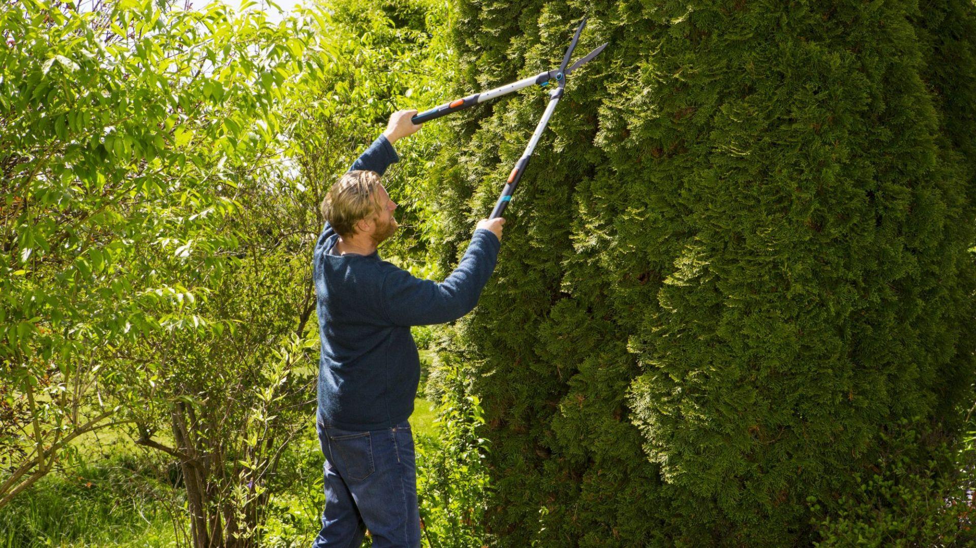 Wiosenne porządki w ogrodzie: nożyce do żywopłotu TeleCut. Fot. Gardena
