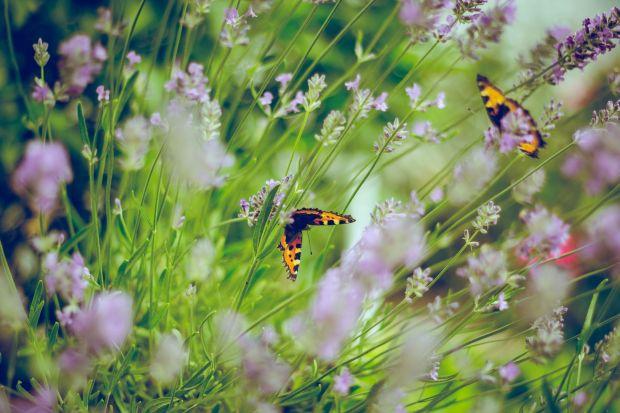 Zrównoważony ogród kwiatowy i warzywny to nie tylko miejsce bardziej przyjazne środowisku. To także duża oszczędność pieniędzy. A najważniejsze - to zdrowie dla nas! Jak go założyć i pielęgnować? Przeczytajcie poradnik stworzony przezdr