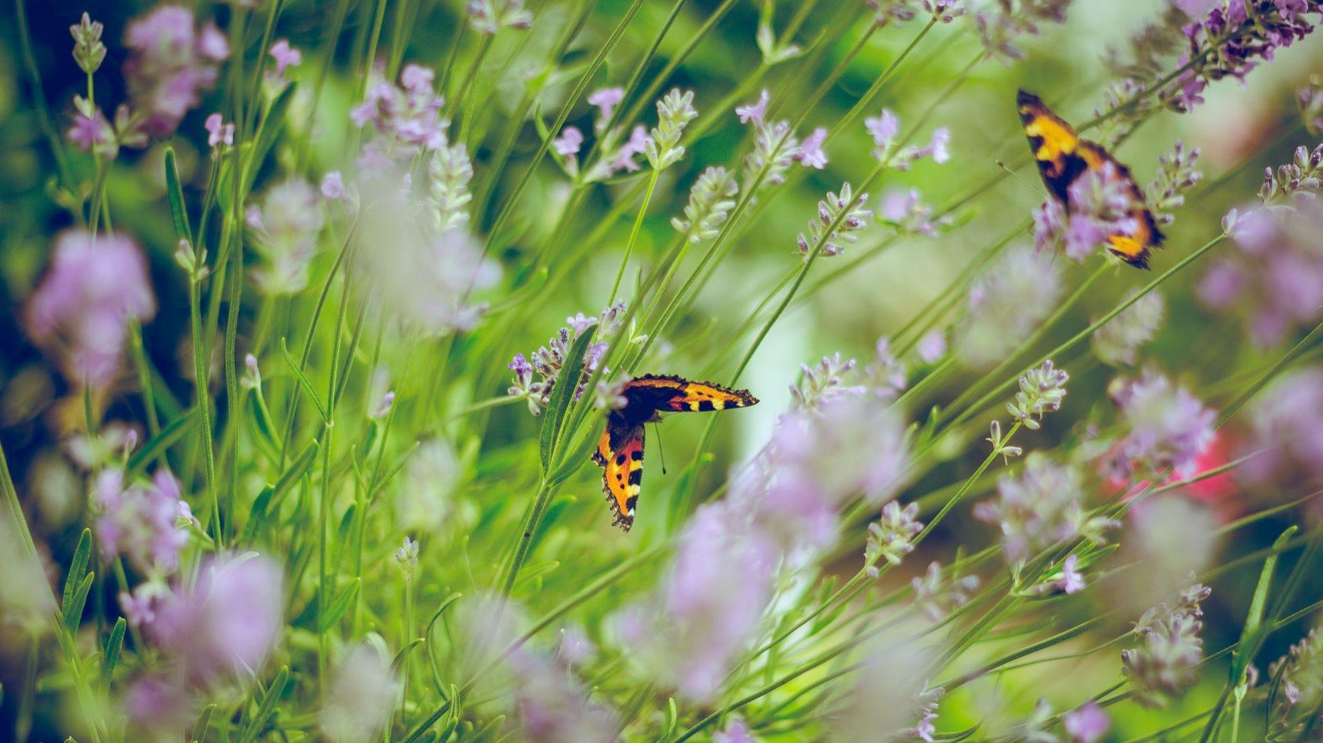 Ekologiczny ogród jest przyjazny owadom. Fot. Unsplash.com
