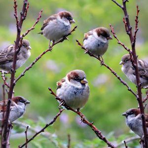 W ogrodzie eko znajdzie się też miejsce dla ptaków. Fot. Pixabay