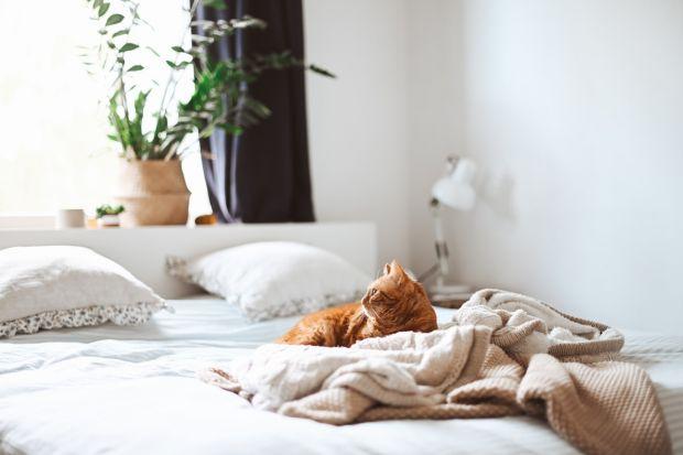 Odpowiednio dobrane łóżko to najważniejszy element sypialni. To od niego w duży mierze zależy bowiem, czy podczas wieczornego relaksu i snu będziemy efektywnie wypoczywać. Sypialnie to przestrzeń to ładowania akumulatorów, aby jednak spełniał