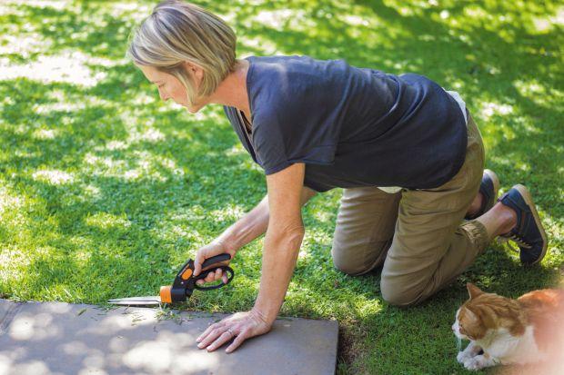 Piękny trawnik: praktyczne porady, dobre rozwiązania