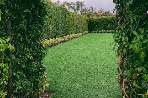Uzyskanie wypielęgnowanej, soczyście zielonej powierzchni wymaga systematycznej pracy: regularnego nawożenia, napowietrzania, dosiewania, usuwania chwastów, podlewania i koszenia. Efekty nie przychodzą od razu ale dostarczają wiele satysfakcji i są