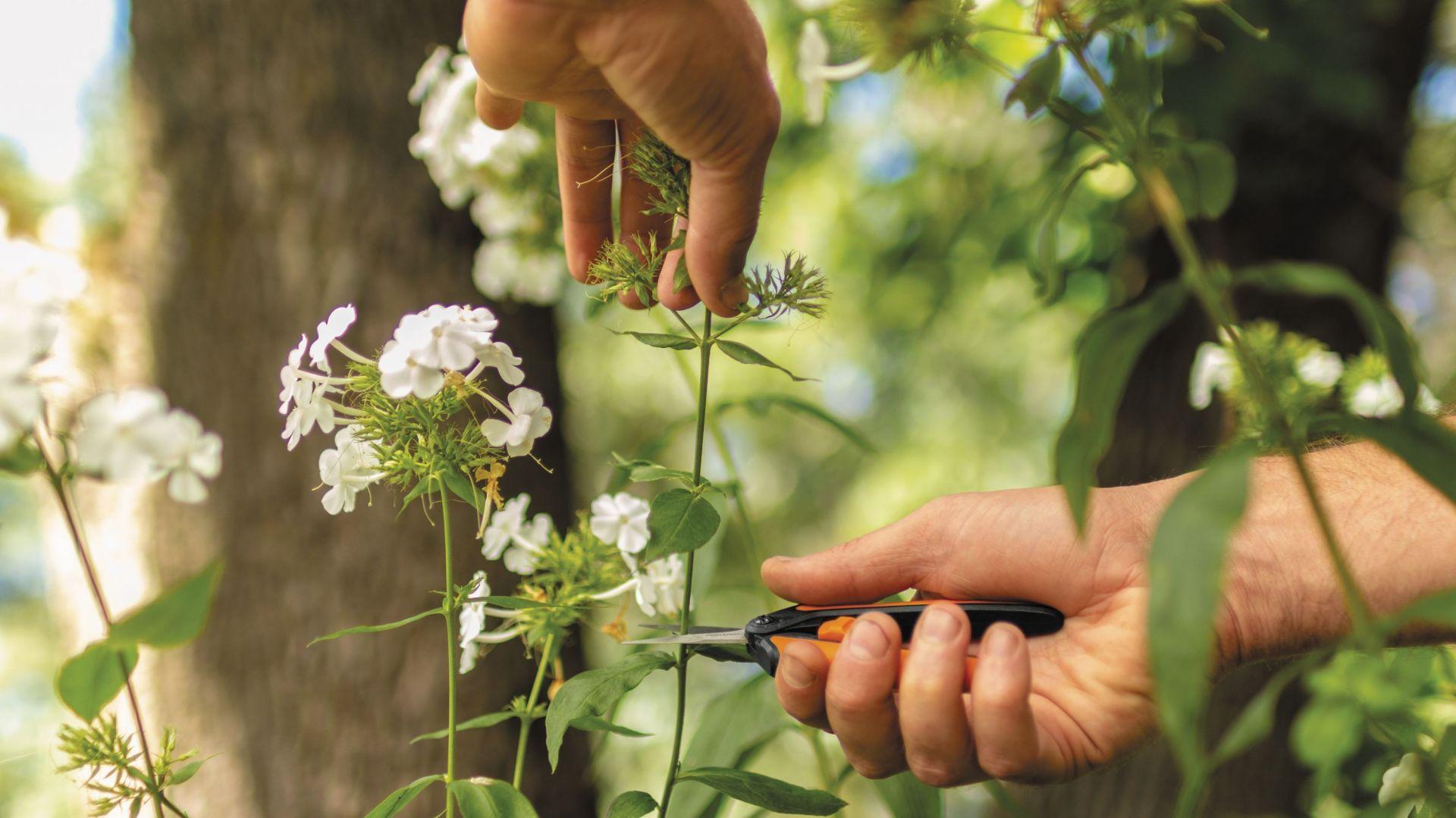 Nożyczki do kwiatów SP13 Solid. Fot. Fiskars