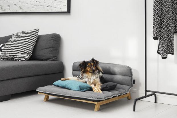 Designerskie meble dla kotów i psów: tak może mieszkać twój pupil