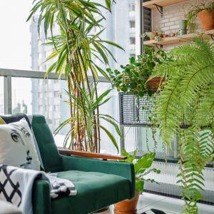 Rośliny doniczkowe to mocny akcent tego wnętrza. Fotel vintage w kolorze butelkowa zieleń. Dom FM, projekt: Mombá Architektura (Argentyna). Zdjęcia: Felipe Lopez