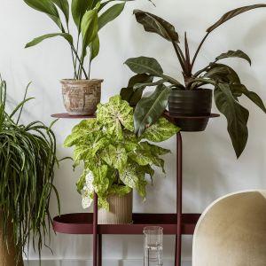 Kwietnik Doppi (Bujnie), pufa z rodziny Stado (Nurt), borokrzemowa karafka (Tre Product), dywan Kilim Raag (Tartaruga), rośliny (Plants For Humans).