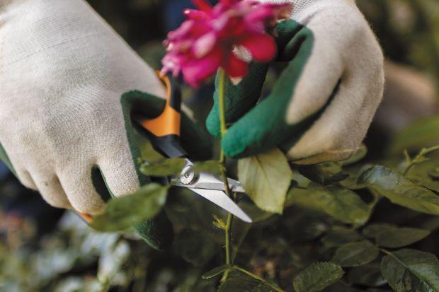 Róże to piękne kwiaty, które są prawdziwą ozdobą wielu ogrodów.Ale to także kwiaty wymagające. Potrzebują odpowiedniej pielęgnacji, gdzie kluczową rolę odgrywa cięcie. <br /><br />