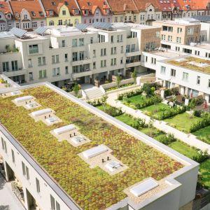 Zielony dach doskonale wytłumia też hałas. Fot. Galeco