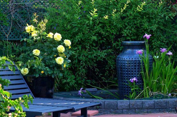 Jak zbierać deszczówkę, a jednocześnie zadbać o piękną aranżację ogrodu? Podpowiadamy!<br /><br />