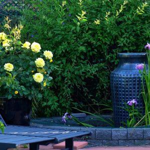 Magazynowanie deszczówki to sposób, aby nasz ogród tętnił życiem, małym kosztem i w duchu eko. Fot. Śnieżka