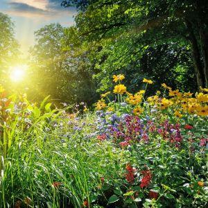 Złożony system korzeniowy roślin wiąże wodę deszczową w glebie, zatrzymując wilgoć dłużej niż trawnik, wpływa ponadto pozytywnie na bilans wód gruntowych. Taka roślinność sprzyja też owadom zapylającym. Fot. Śnieżka