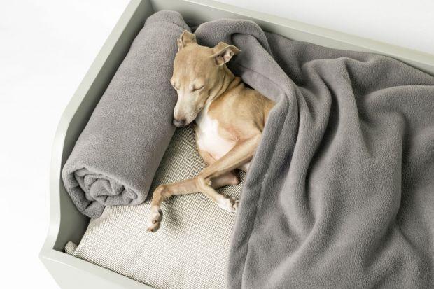 Nic słodszego dziś nie zobaczycie: 10 mebli i gadżetów, które pokocha wasz pies