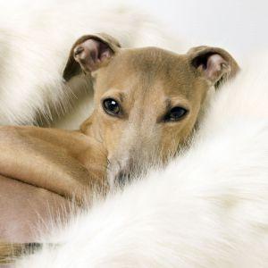 Kocyk dla psa - miś polarny. Ok. 366 zł. Fot. Charley Chau