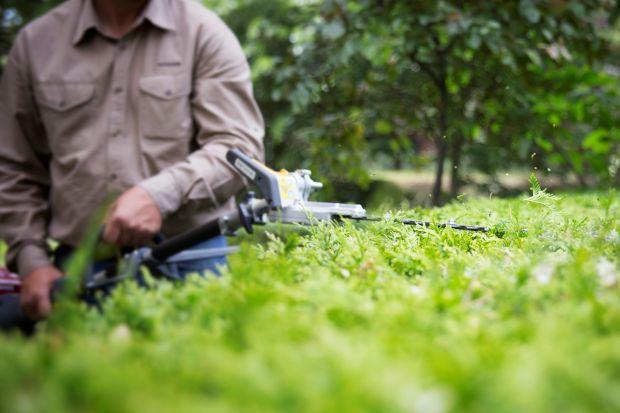 Sierpniowa pełnia lata to kalendarzowy termin letniego przycinania wybranych gatunków krzewów. Podpowiadamy, co i jak ciąć w ogrodzie.