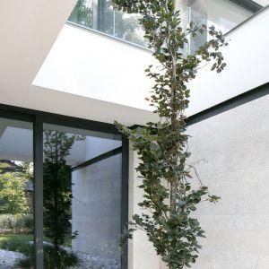 Projekt zachował istniejące  na działce drzewa. Projekt i zdjęcia: REFORM Architekt