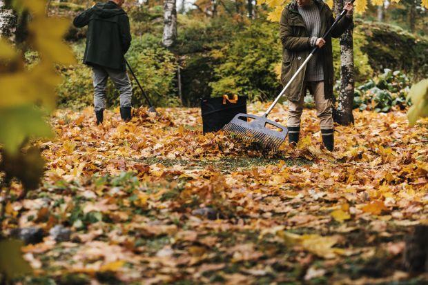 Uprzątnięcie spadających liści w ogrodzie może być prawdziwym wyzwaniem. Z pomocą przychodzą nam jednak specjalne grabie do liści. To niezbędnik każdego ogrodnika.