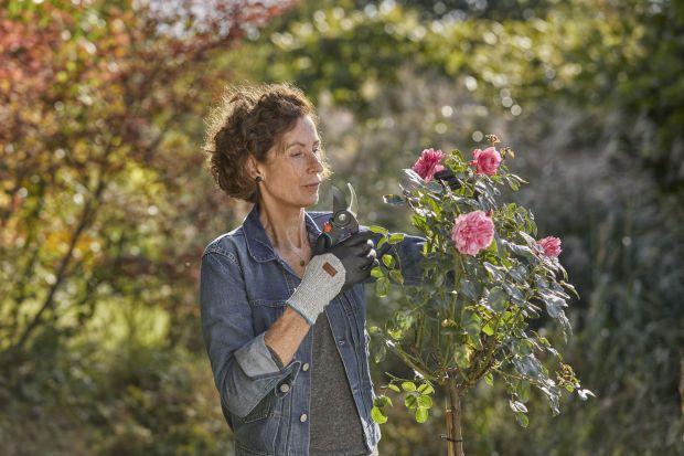 Dni stają się coraz krótsze, to znak, że należy zacząć przygotowywać nasz ogród <br />na nadejście zimy. Warto w tym czasie pomyśleć nie tylko o porządkach, ale także <br />o przycięciu roślin. Lekkie przycinanie, formowanie cz