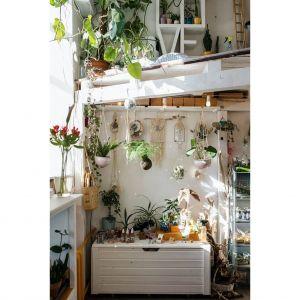 W sypialni szczególnie warto jest, uprawiać rośliny, które mają zdolność odwróconej fotosyntezy, co oznacza, że w nocy produkują tlen – dotleniają organizm i nawilżają powietrze. Fot. Zepter