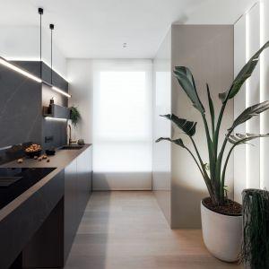 Żywe rośliny znajdują się w wielu częściach mieszkania. Projekt: pracownia hilight.design