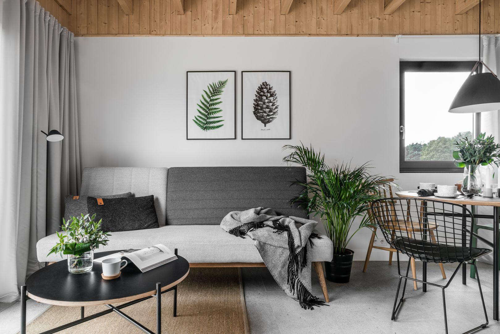 Biało-szary salon w skandynawskim stylu ożywiony pięknymi roślinami. Projekt: Raca Architekci. Fot. Fotomohito
