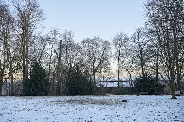 Zima nie oznacza, że możemy całkowicie zapomnieć o naszym ogrodzie. Pracy na pewno będzie mniej, ale musimy pamiętać o usuwaniu opadłych liści, zalegającego śniegu czy przycinaniu gałęzi.